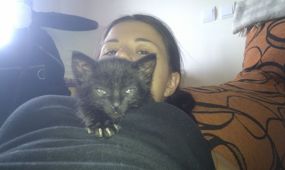 baby sombra Cats Blackcats Gato Negro Black Phanter