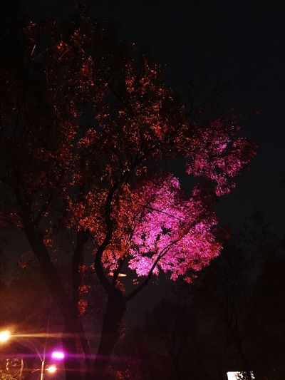 Tree Illuminated Growth Nature Low Angle View Night No People Beauty In Nature Branch Fragility City Built Structure Sky Outdoors Architecture Freshness