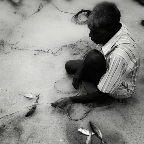 A fisherman taking out the fishes from the net..
