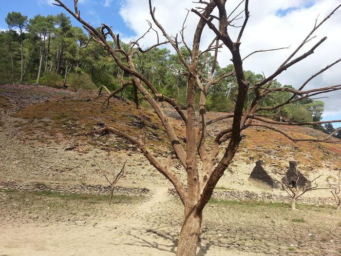 Showcase: January Dryed Lake Tree Bretagne Brittany