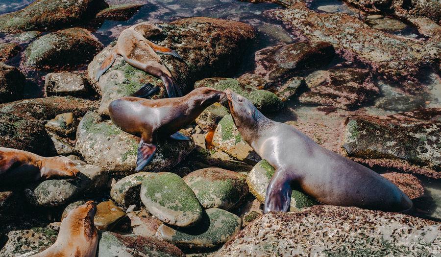 Animals In The Wild Sea Lion Sea Lions Summer Exploratorium Wildlife & Nature Animal Animal Photography Animal Themes Animal Wildlife Baby Animals Sea Sea Life Sealions Seascape Seaside Wildlife