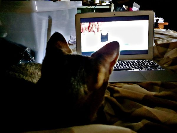 Cat Movie Time Movıe Relaxing Relax Mac Book Film Watching Pet Portraits
