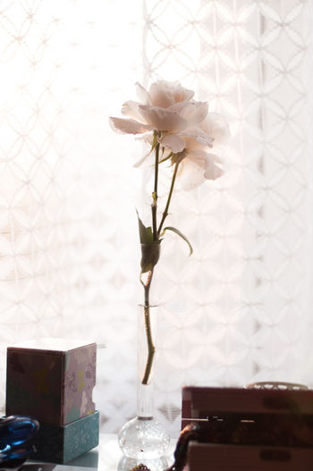 Close-up Day Decoration Domestic Room Flower Flower Head Focus On Foreground Fragility Growth Nature No People Petal Plant Rose - Flower Selective Focus Simplicity Stem Still Life Vase Window Sill