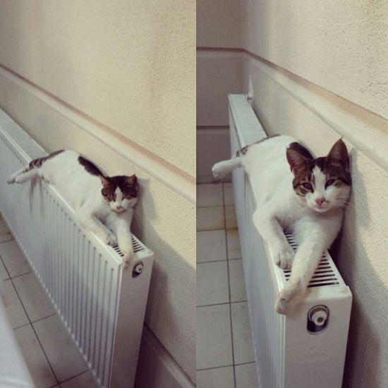 Günaydın! 😊😊 Kedi Kedicik Patidostluğu Benimkadrajim Fotografheryerde Photography Cat Lovemycat Catstagram Instagood Haftasonu