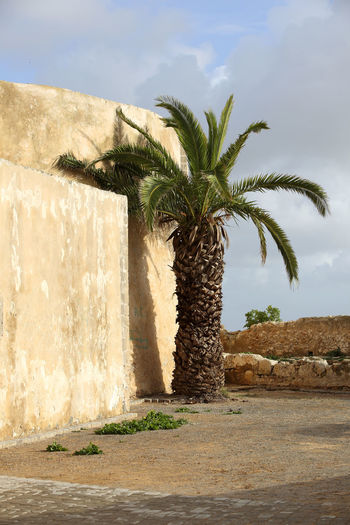 Day El Jadida Morocco MoroccoTrip Nature No People Outdoors Palm Tree Travel Travel Destinations Travel Photography Tree Water