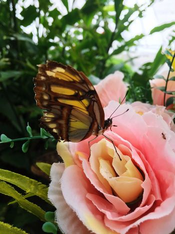 Butterfly Flower Petal Fragility Nature Animals In The Wild Insect One Animal Beauty In Nature Animal Themes Freshness Flower Head No People Plant Growth Butterfly - Insect Day Close-up Outdoors Animal Wildlife Focus On Foreground
