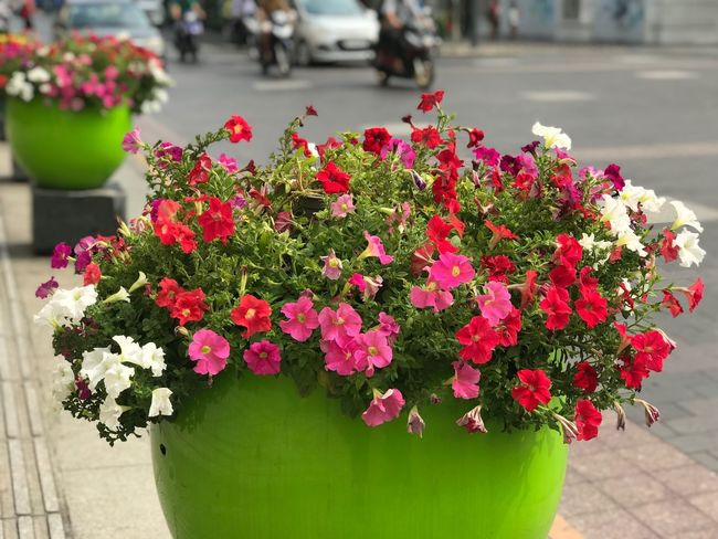 Eyem Nature Lovers  Amaturephotography Multicolored Flowers Colorful Travel Photography EyEmNewHere Eyemphotography Flowering Plant Flower Plant Vulnerability  Freshness Growth Fragility Beauty In Nature Nature Inflorescence Flower Head Potted Plant
