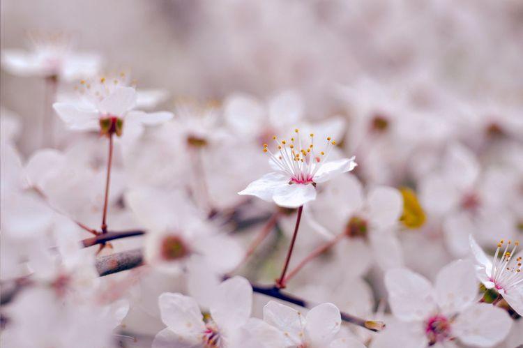 Flowers White Plants Nature Peaceful Zen EyeEm Nature Lover OpenEdit Tokyo EyeEm Best Shots