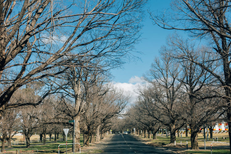 Road amidst bare trees in park against sky