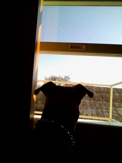 Pitbull Rednose  Dogs Best Friends Light And Shadow Sunrise Enjoying Life Check This Out Taking Photos Cute Pets this is Mr PinkyToe .