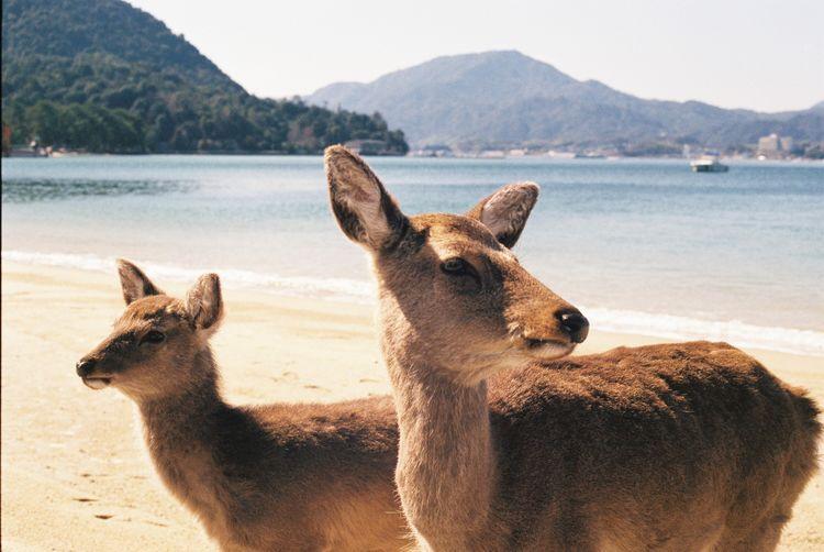 Close-up of deer at beach