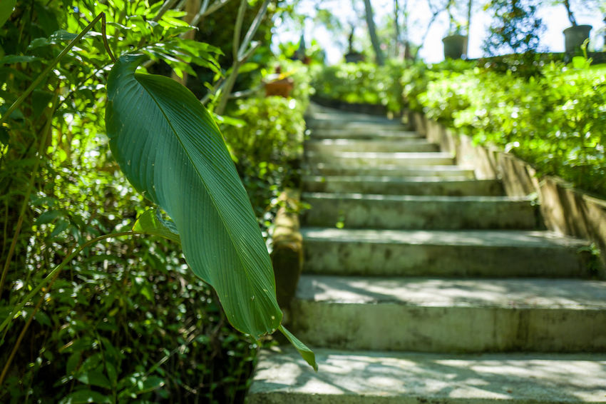 Garden and stairs in Canggu Green Palm Stairs Architecture Banana Beauty In Nature Canggu Close-up Day Focus On Foreground Garden Green Color Growth Land Leaf Leaves Low Angle View Nature No People Outdoors Plant Plant Part Staircase Steps And Staircases Sunlight Tree