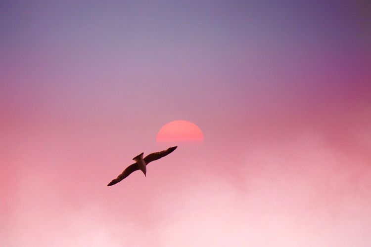 Flying Mid-air Low Angle View One Animal Animal Themes Animals In The Wild Bird No People Nature Outdoors Spread Wings Sky Day Nature Landscape Sky And Clouds Sun Sunset Beauty In Nature Colorful Animals Animals In The Wild Free Beautiful Nature Fly