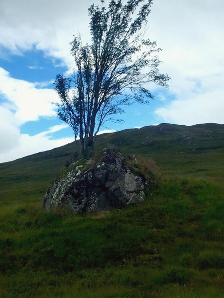 What's On The Roll Tranquil Scene Sky Beauty In Nature Tree Landscape Cloud Outdoors Grassy Remote Hill Rocks Day Bridge Of Orchy Countryside Non-urban Scene Geology