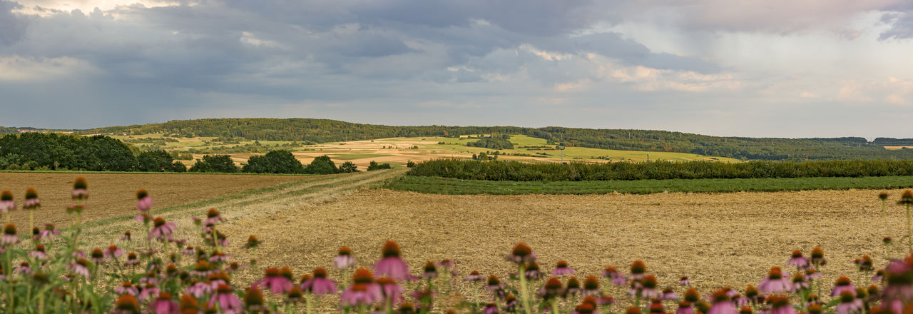 Panorama from