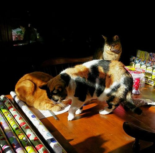 Mission Impossible Wrapping Presents with 3 Cats! Party Favors Party Planning Silly Kitty Catlovers Cat Ohio, USA