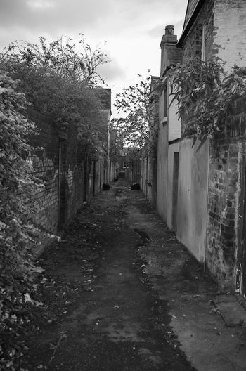 Nature fights back City Dark Decay Road Road To Nowhere Alley Alleyway Built Structure Dismal Nature Taking Over Nature Taking Over Again No People No People, Outdoors Street Urban