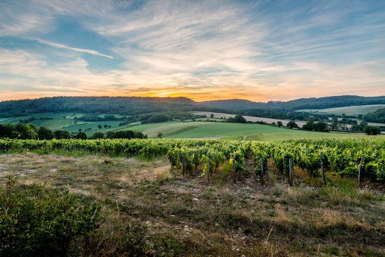 Bourgogne EyeEm