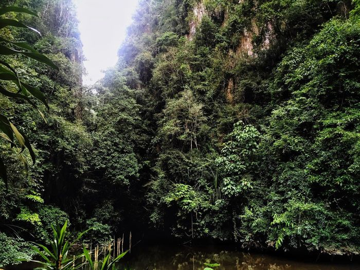 Forest 6th Mile Tunnel Natural Beauty In Nature Limestone Cave Ipoh,Malaysia Tambun City Ipoh Green Color Peaceful View EyeEm Selects Perak History Through The Lens  The Week On EyeEm Live For The Story