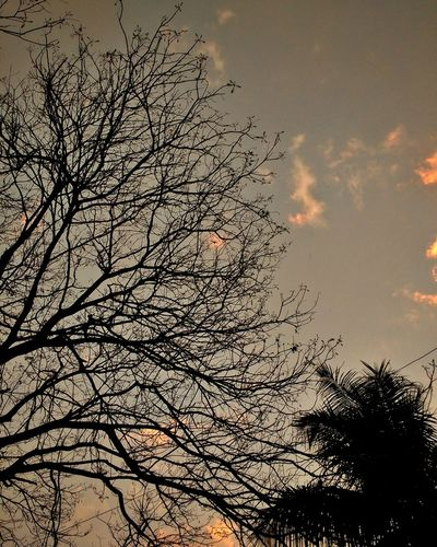 Random Pic Trees And Sky Firstpicture Upload First Eyeem Photo