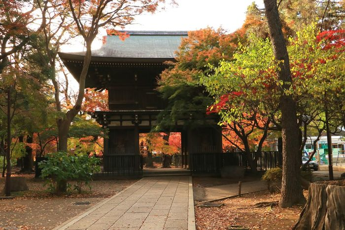 Tree Red Color Green Maple Leaf Temple Japan Landscape Autumn Leaves Japanese Temple Leaves And Colors Leaf Gate