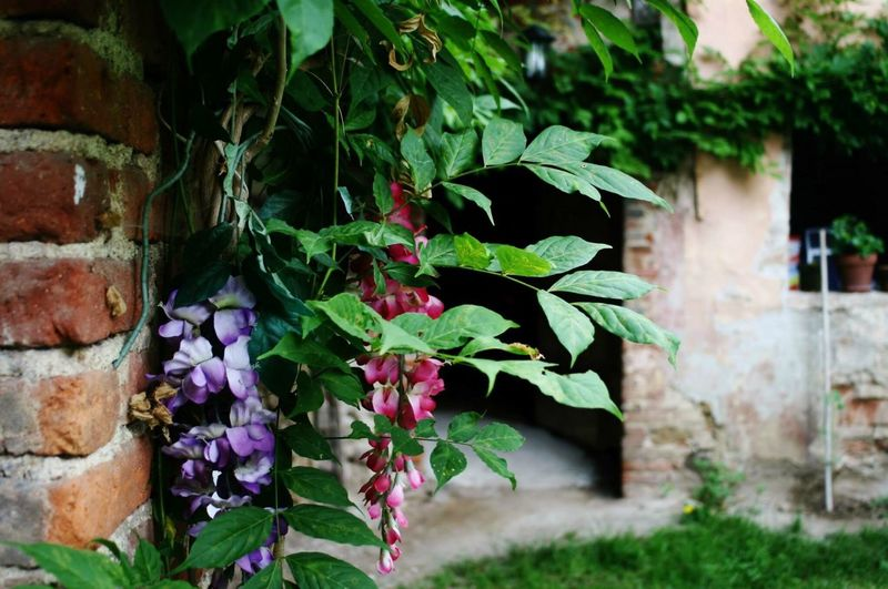 Mongrando Mongrando Growth Plant No People Nature Green Color Day Built Structure Outdoors Leaf Close-up Architecture Fragility Flower Beauty In Nature Ivy Freshness