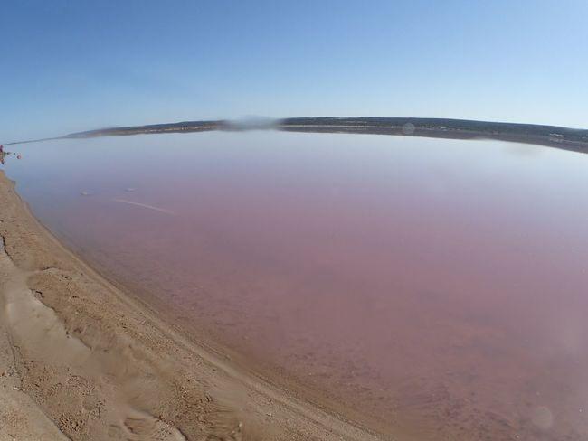 Amazing Nature Australia EyeEm Best Shots EyeEm Gallery EyeEm Nature Lover EyeEmBestPics Fish Eye Lake Nature Pink Pinklake Sand Shore Sky Water WesternAustralia