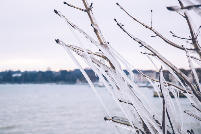 Frozen trees in Geneva after a winter storm. Beauty In Nature Branch Close-up Cold Temperature Day Focus On Foreground Freezing Frozen Ice Icicles Nature No People Outdoors Scenics Season  Sky Snow Tranquility Tree Water Winter