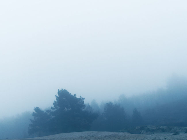 Beauty In Nature Claudetheen Cold Temperature Fog Landscape Mist Nature Tree Weather Winter
