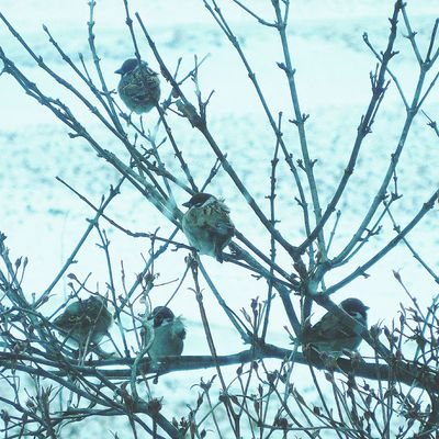 Cold…cold… Help we!🐦🐦🐦 Sparrow Cold Branching Winter Sky