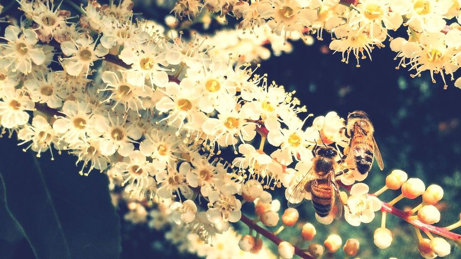 Spring Into Spring Honey Bee First Eyeem Photo