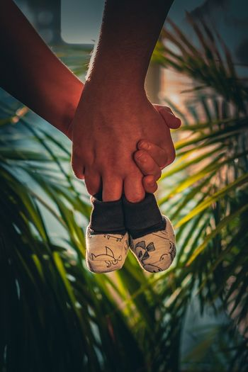 Low section of person wearing shoes on plant