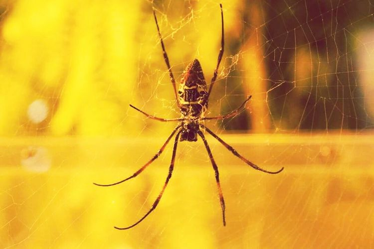 Spiders Animal Themes Animal Photography Spider Nature_collection Eyenaturelover Spid