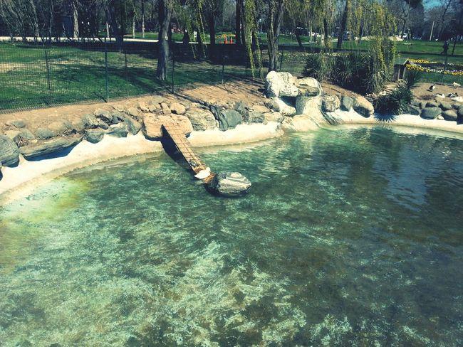 Pool Poolside Poolsideview