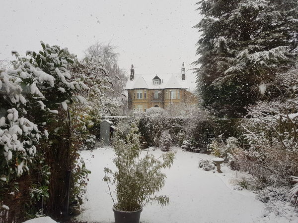 Snow Snowing Snow Day Harrogate House Garden Winter Garden Winter Winter Time Christmas Weather Sky