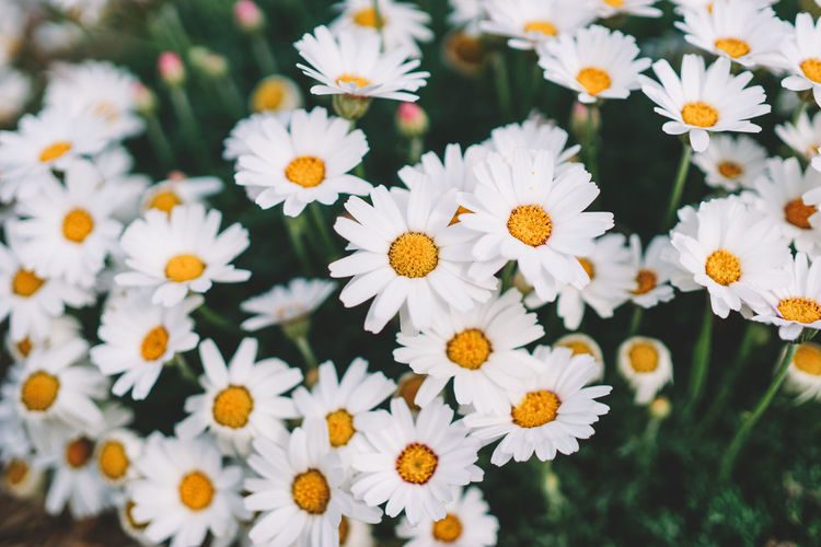 Beauty In Nature Blooming Close-up Day Flower Flower Head Fragility Freshness Growth Nature No People Outdoors White Color