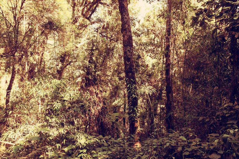 Trees,