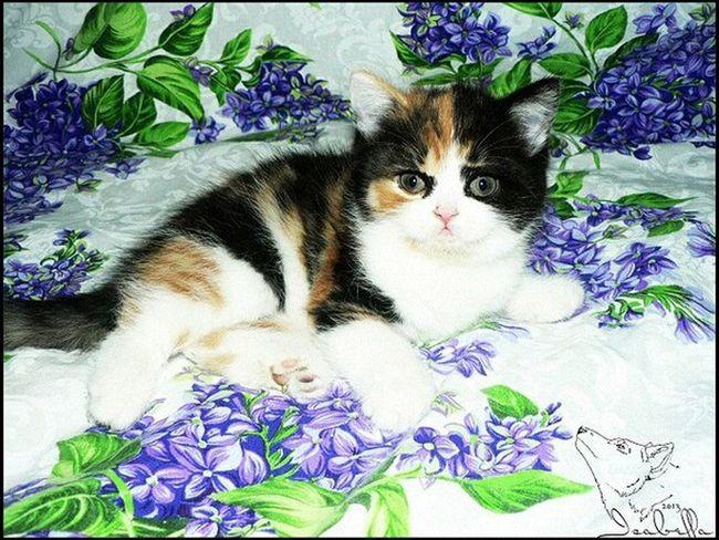 кошка котёнок Аллегра Cat черепаховая