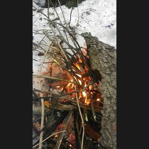 балатовский лес лучшиемоменты