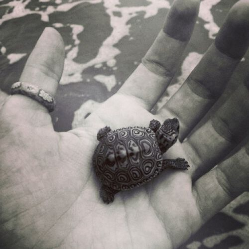 Lovelybaby Turtle Animals Cutie <3