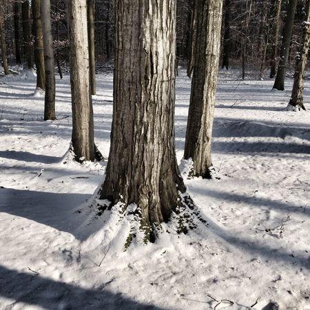 Repost three trees Threetrees