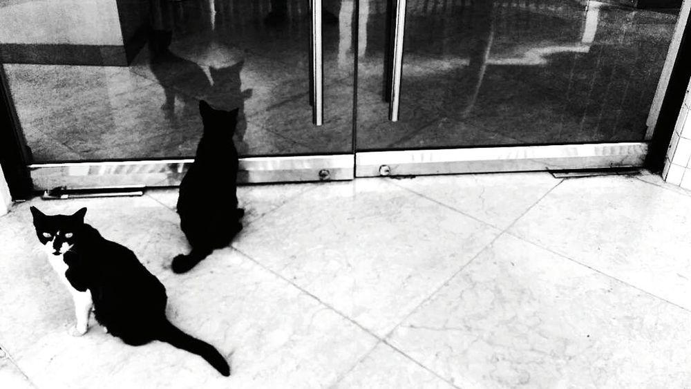 Twins. IDN 2017Indonesian Street Photography EyeEm Indonesia Public Places INDONESIA Street Photography Benproject EyeEm Best Shots - The Streets Maklumfoto EyeEm The Streets Streetphotography_bw Documentary The Week On Eyem EyeEm Best Shots