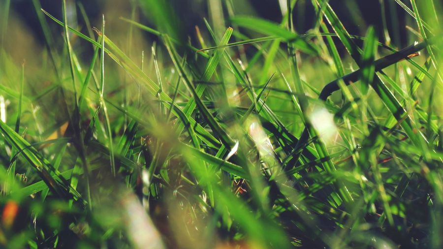 Nature Growth Green Color Plant Grass Field No People Close-up Tranquility Outdoors Beauty In Nature Day Rural Scene Leaf Backgrounds Freshness Lush - Description Nature Green Color Grass Beauty In Nature