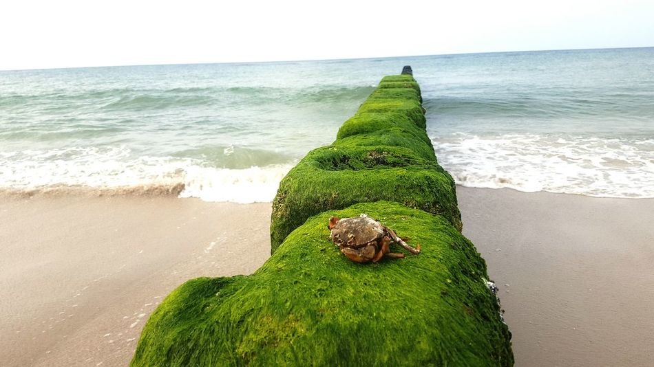 Sea Horizon Over Water Water Green Color Moss Scenics Tranquil Scene Tranquility Nature Ocean Shore Summer Beauty In Nature Sky Green Wave Solitude Day Outdoors Getting Away From It All Crab The Week On EyeEm