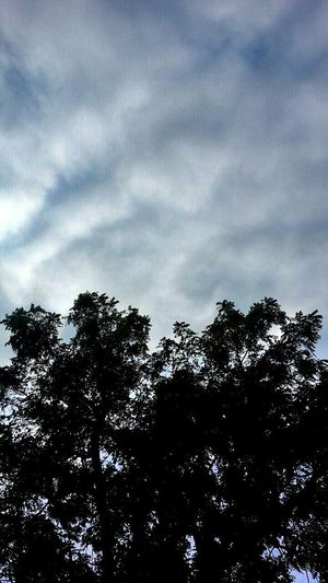 Tree Sky Clouds And Sky Sky And Clouds Clouds Laying Down Relaxing Picture Enjoying Life Hello World