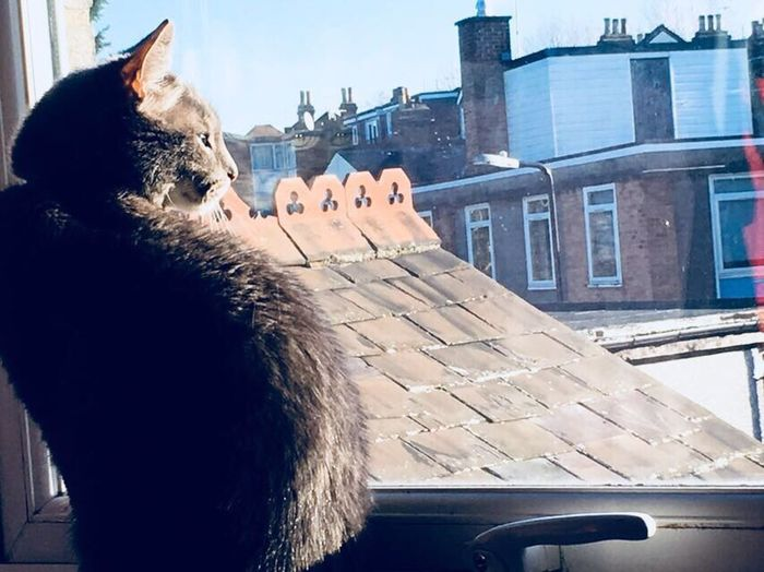 Cat Feline One Animal Pets Animal Themes No People Window Day Sunny Day Blue Sky Indoors  Roofs London Londonroofs