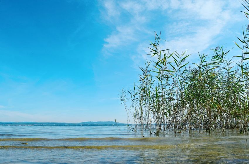 Sea Sky Beauty In Nature Nature Water Tranquil Scene Tranquility Scenics Horizon Over Water Blue Day Outdoors No People Cloud - Sky Beach Tree Bodenseebilder Schilf Bodensee