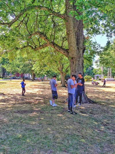 Together and yet apart.....Pokémon Go in Connecticut. Socializing Stratford Walking Around Walkabout Hispanic Latino Connecticut New England  USA Pokemon Go Pokémon PokemonGo Pokemon Hunting Outside Outdoors Summer Summertime July Academy Hill Friends Boys Male People Together Nerdy Tree