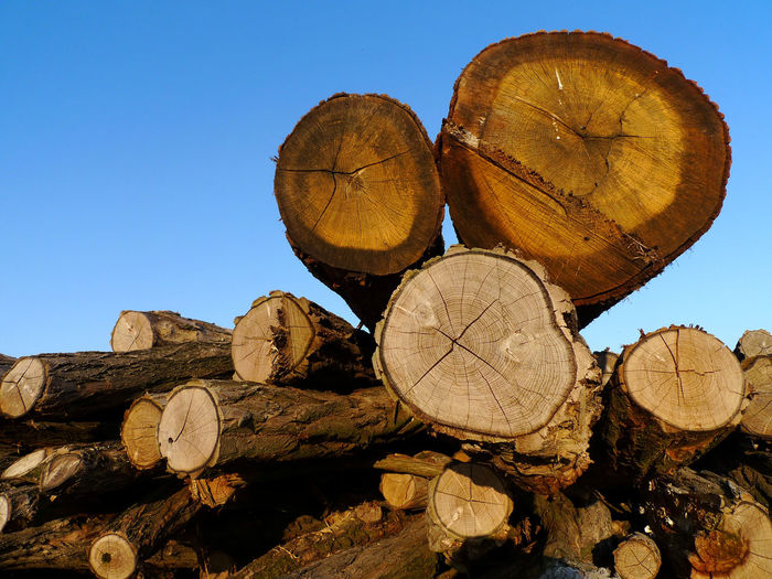Log Timber Wood Deforestation Stack Wood - Material Nature Firewood Lumber Industry Forest Tree Sky Day No People Clear Sky Fuel And Power Generation Land Blue Large Group Of Objects Outdoors
