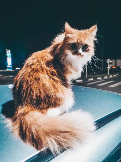Portrait of cat looking away